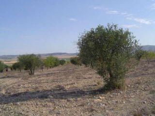 Terreno/Finca Rstica en venta en Yecla, Murcia (Costa Cálida)