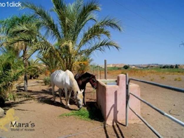Finca/Casa Rural en venta en ,  (Costa de la Luz) - Ref. 2488997